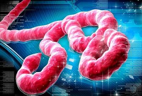 El ébola es un filovirus formado por una pequeña partícula y una envuelta.