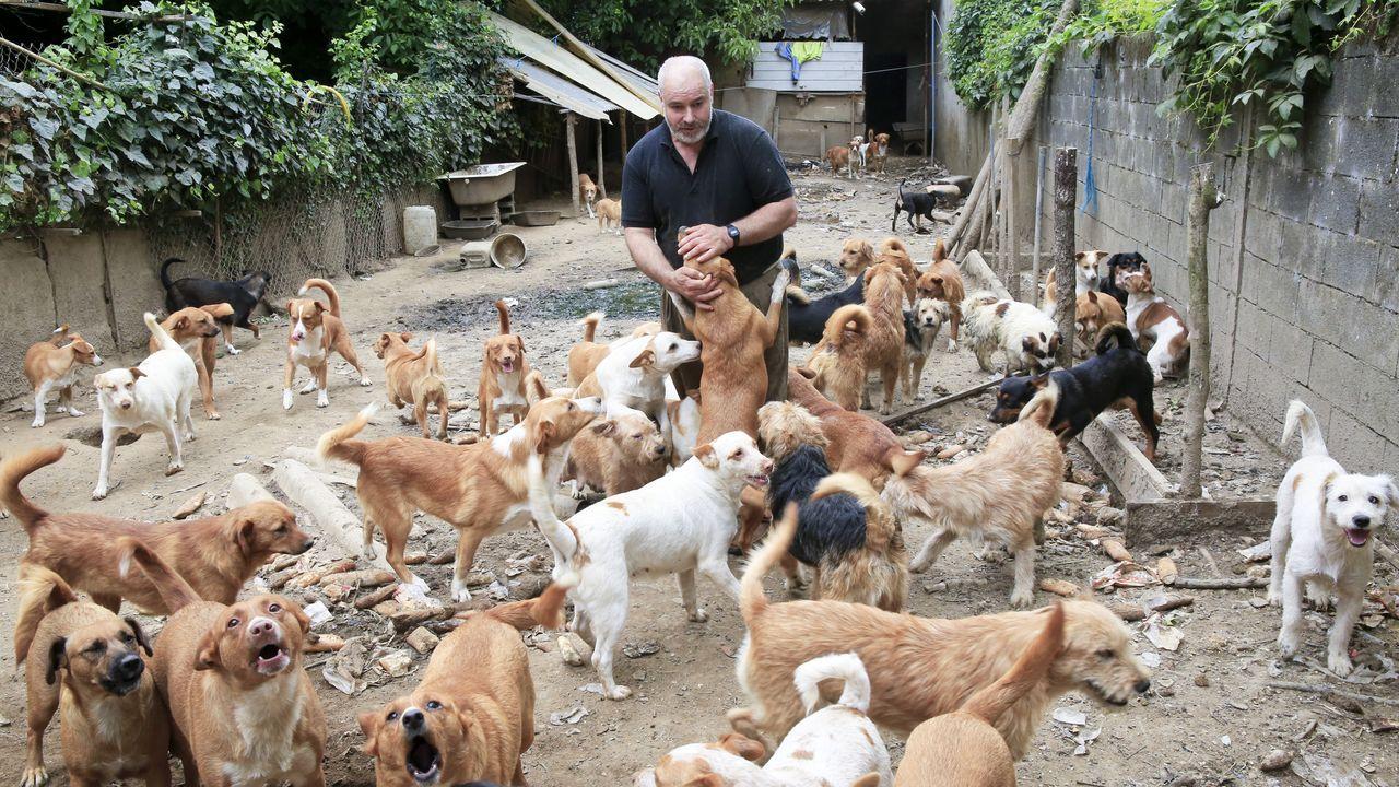 Playas en la provinciade Lugo.El Concello de Lugo asegura que actuará con responsabilidad para salvar la situación de los perros y de Fernando Fornes