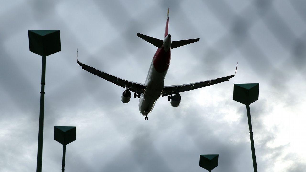 Halcones usados en el aeropuerto de Alvedro para el control de aves