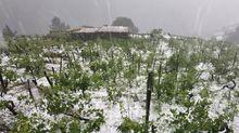 El granizo arrasa los viñedos en la mayor ribera de Chantada