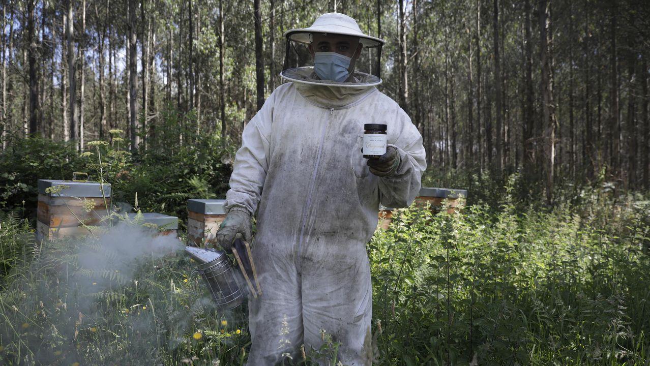 Apia Natura, la premiada miel fabricada en Oza-Cesuras.Contraste entre horizonte despejado y niebla en Muras