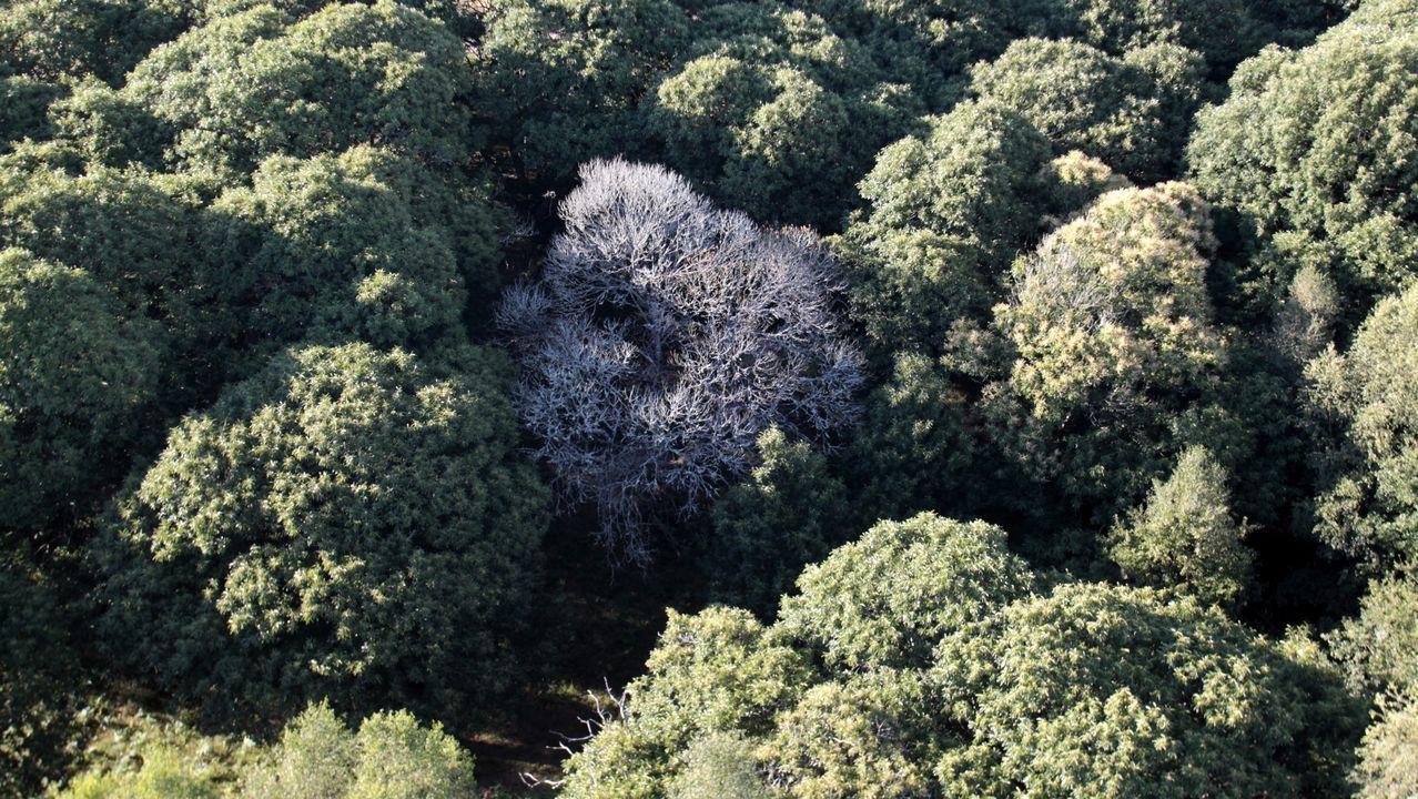 Bosque autótotonos visto desde el globo