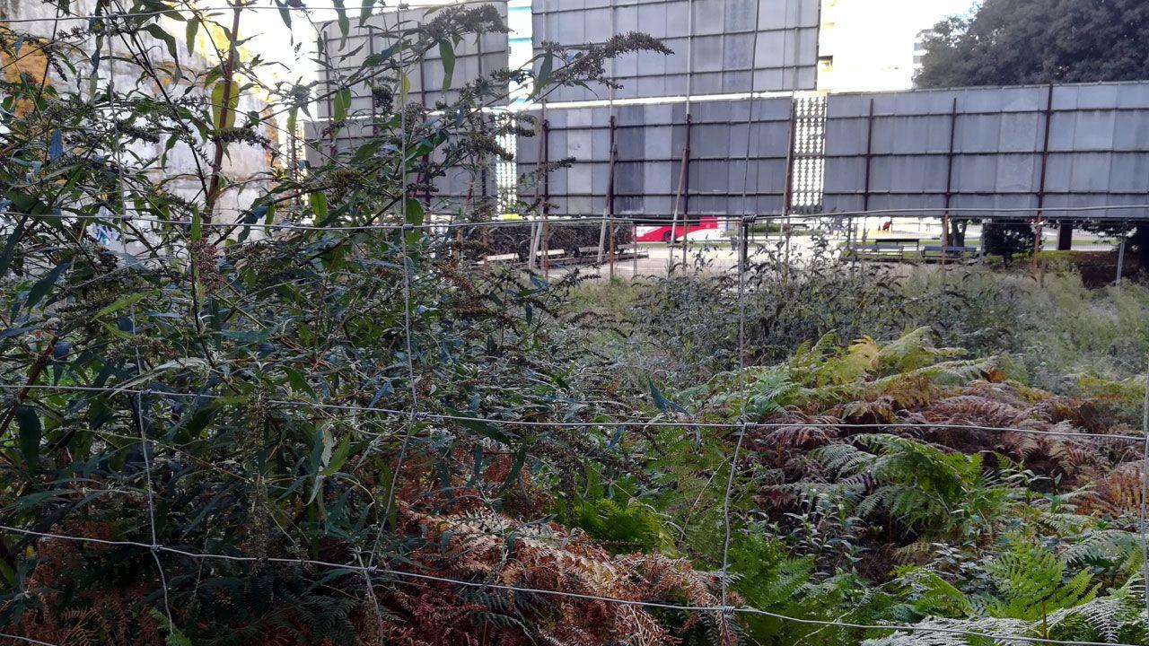 Vegetación en un solar ubicado entre la carretera de la Costa y la calle Aller, en pleno centro de Gijón