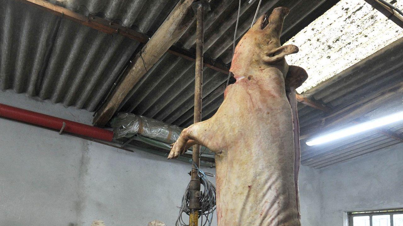 Las matanzas están muy presentes en muchas comarcas gallegas