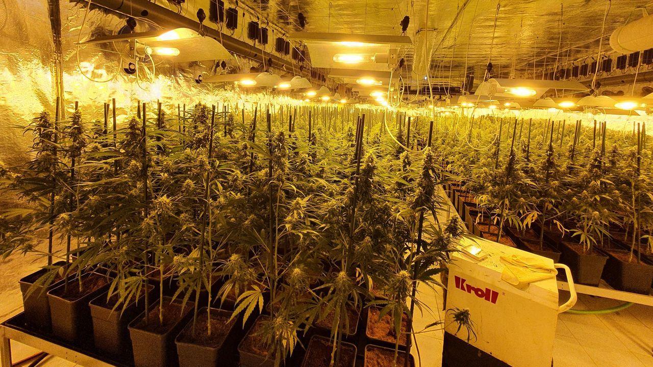 Descubren una gran plantación de marihuana en Barreiros.Soliciantes de asilo en EE.UU. hacen cola en el paso de El Chaparral, en Tijuana
