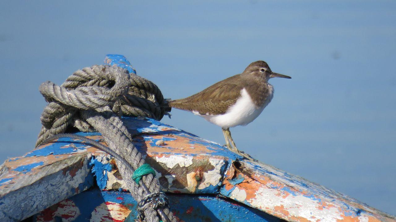 Las aves que pasan el invierno en Ferrol