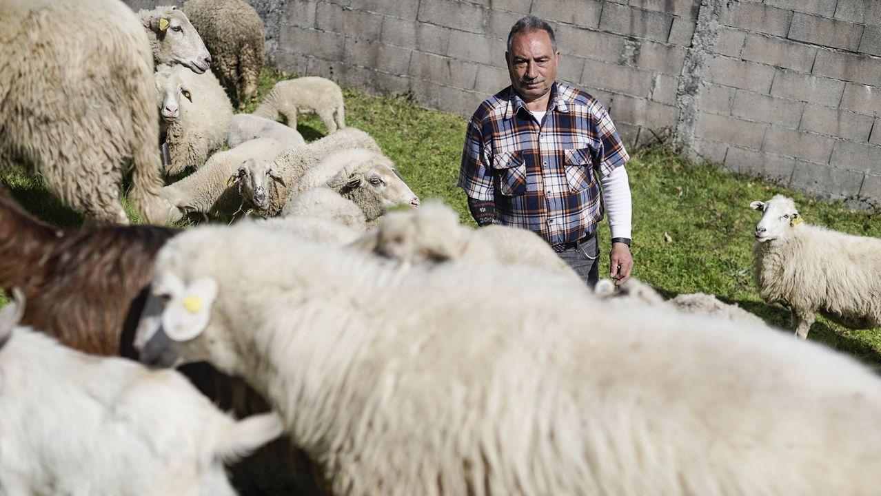Tito Gabián cuida a sus ovejas en la aldea de Oroso en el concello de Avión