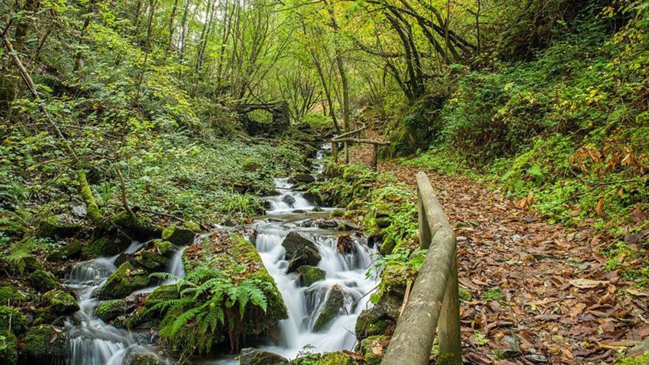 Bosques de Taramundi