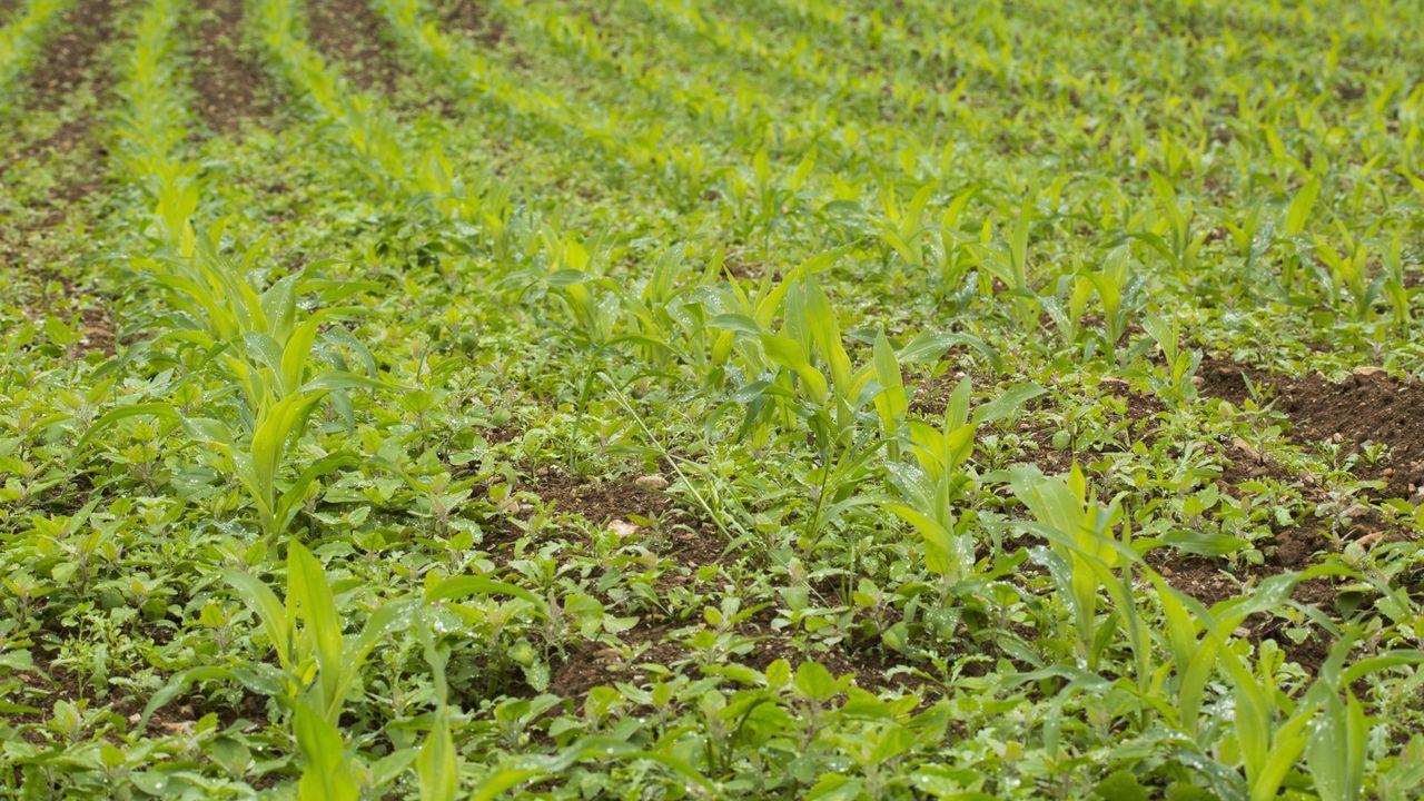 Una planta para cada rincón.En el mercado de Vilalba abundaban este martes las plantas para cultivo