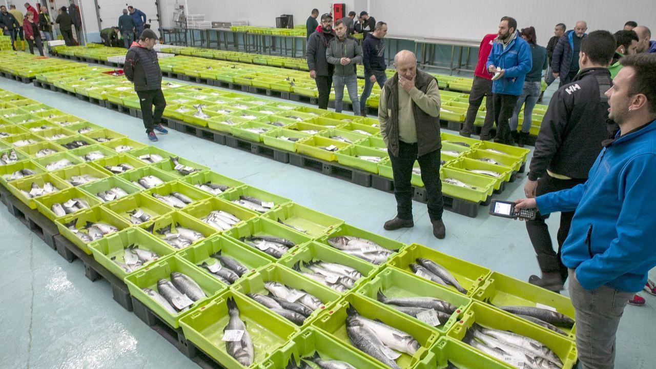 El titular de Agricultura, Pesca y Alimentación estima que alrededor de un tercio de la flota pesquera española está parada por el coronavirus
