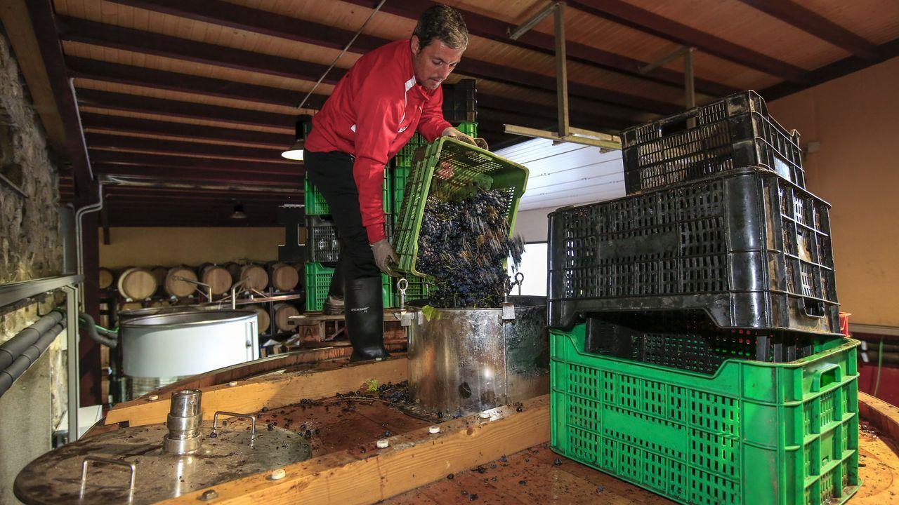 Los trabajadores introducen la uva desde la parte más alta de los depósitos