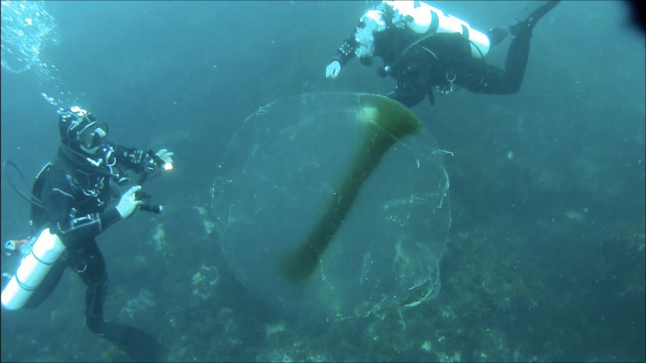 La enorme esfera traslúcida, que fue vista en las inmediaciones de Punta da Mansa, tenía miles de huevas de calamar dentro