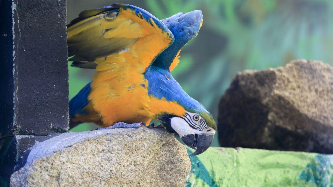 En Avifauna se pueden ver aves de unas 150 especies originarias de todo el mundo. Este guacamayo, por ejemplo, tiene cerca de 40 años