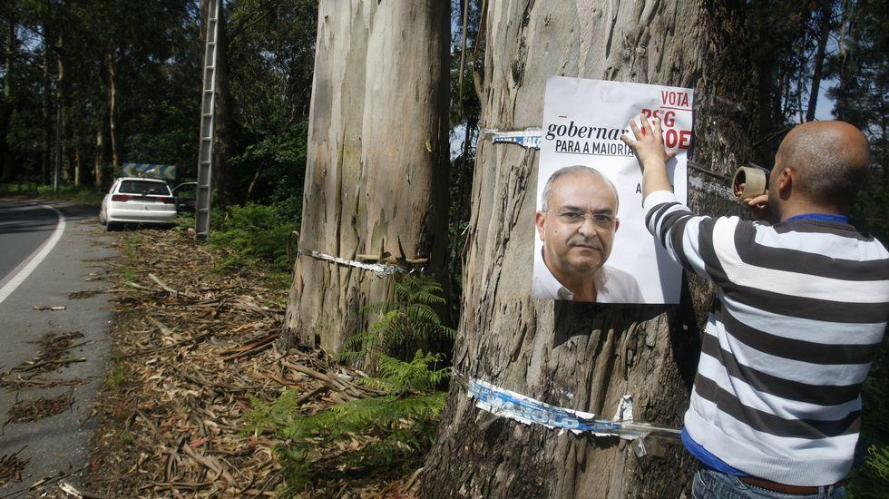 En Catoira, ni los árboles se libran de la pegada de carteles