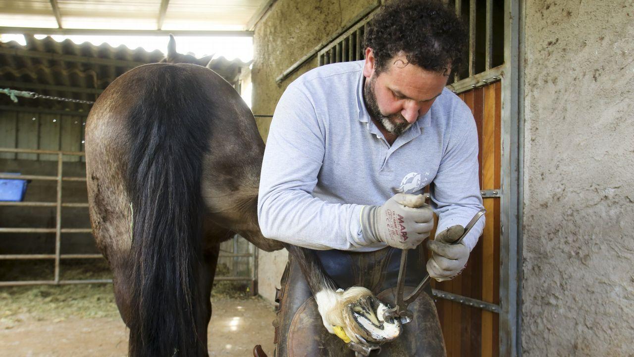 Cervantes recuperó la histórica feria de ganado.Adrián Ferrol García en la granja donde encontró trabajo a través de Emprural