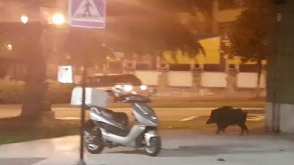 Un jabalí en la calle Pérez de la Sala, en Oviedo