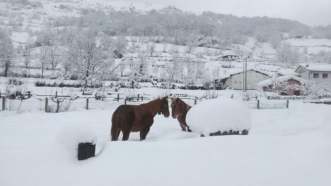 La nieve ha cubierto los prados, dejando a los caballos sin pasto