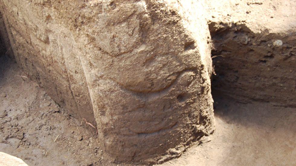 Las mejores imágenes de la excavación.LOS GENES ALTERADOS. La nube de palabras muestra el nombre de los genes que causan más mutaciones