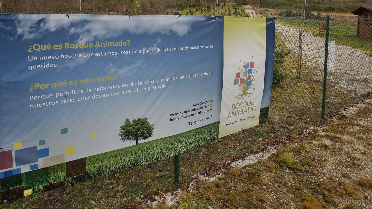 El Bosque Animado de Soandres, A Laracha: una finca para depositar cenizas de mascotas y personas que, finalmente, fracasó. Ahora el terreno está abandonado.