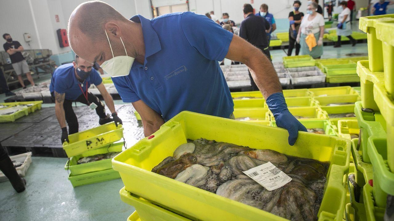 Golpe en Portugal a la venta de bivalvos contaminado.Lobo con restos de trampa en el cuello