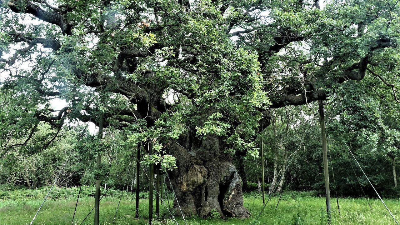 Bosque de Sherwood