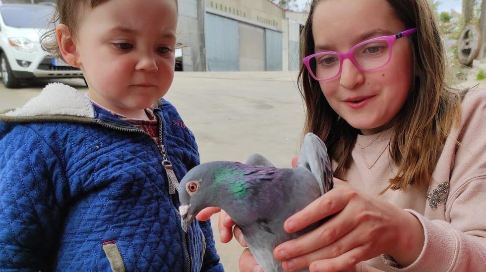 Una de las palomas encontradas