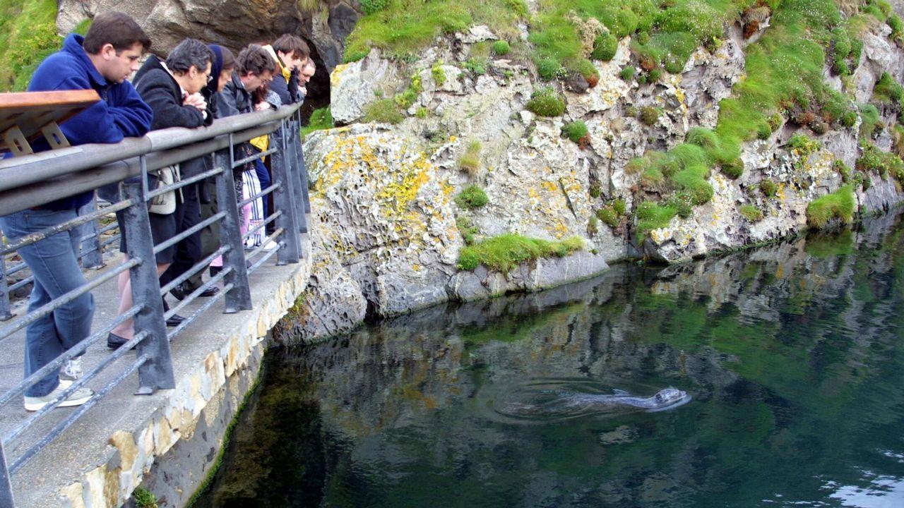 acuario.La actividad para darle la merienda a las focas es una de las más demandadas de la instalación