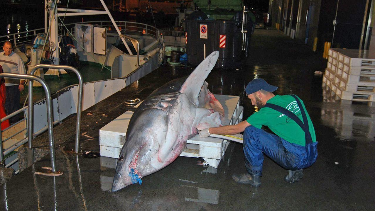 Imagen de archivo de un oceanógrafo midiendo un marrajo en el puerto de Vigo