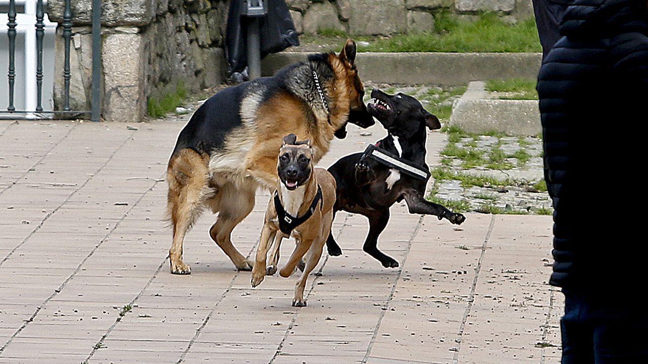 Perros sueltos jugando, en una imagen de archivo