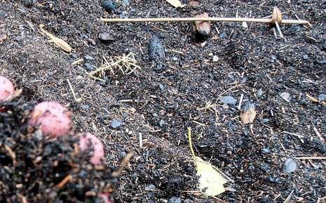 Los restos evidencian que proceden de un incendio forestal.