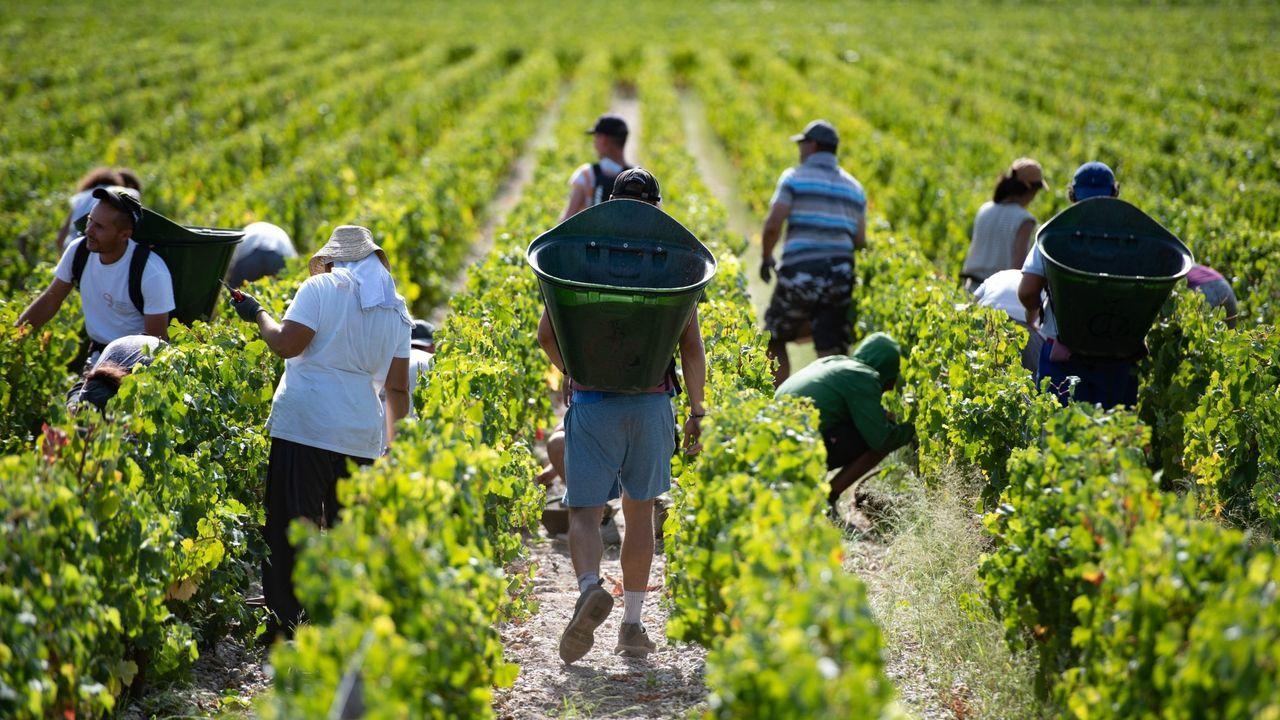 Trabajadores en un viñedo de la zona de Burdeos (Francia)