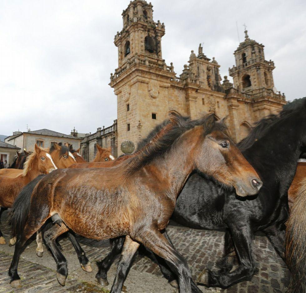La feria de As San Lucas, con sus caballos, uno de los atractivos.