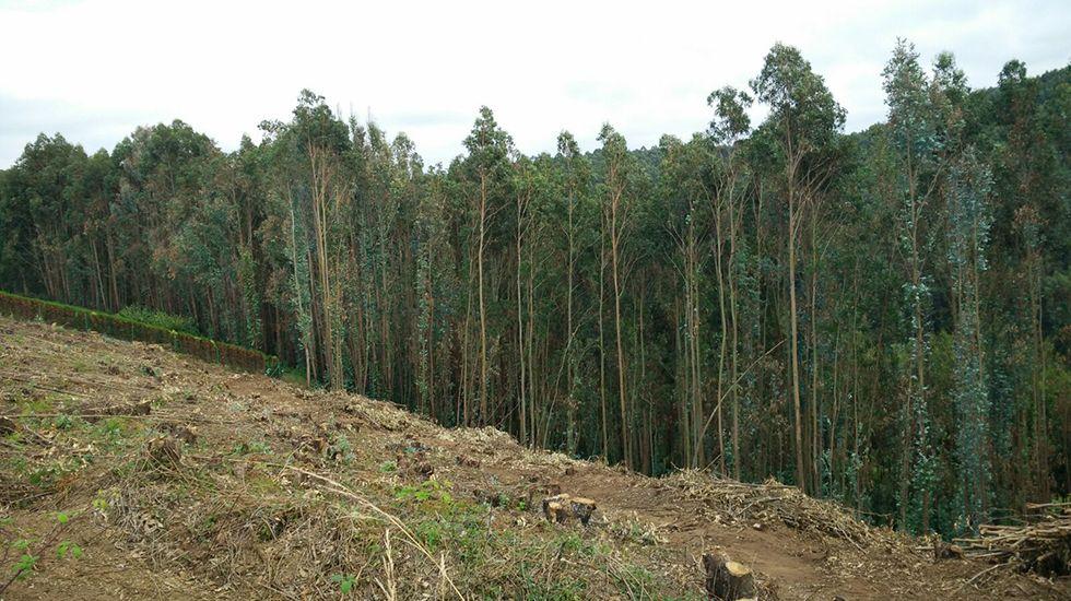 La PAH paraliza un desahucio en Oviedo.Eucaliptos talados en Castrillón