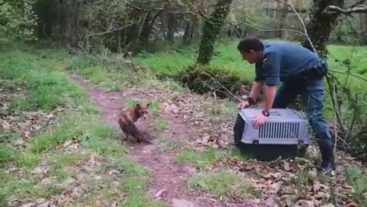 Rescatan a una burra gracias al refugio de animales de Cambados.El abogado Víctor Tartiere junto al exgerente del Serida Juan Luis Osoro