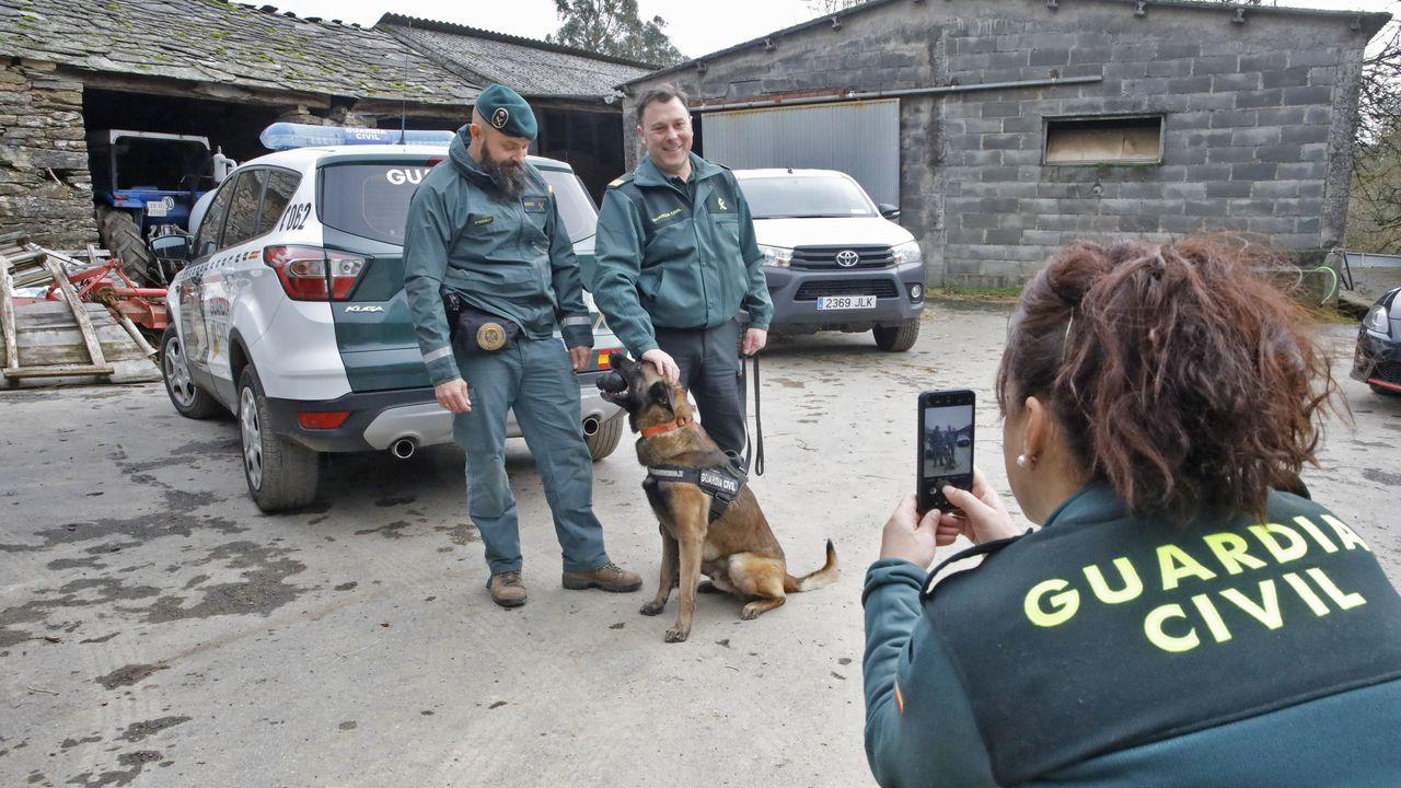 Tor, el perro del servicio cinegético de la Guardia Civil de Gijón que encontró a la mujer desaparecida en Basille.Fiesta del Porco Celta en Sarria