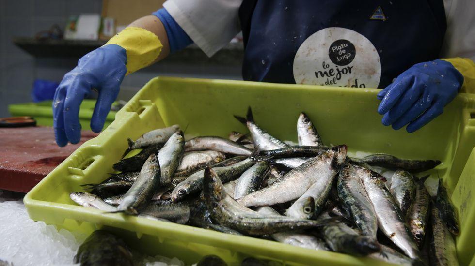 Sardinas frescas en una pescadería gallega, en una imagen de archivo