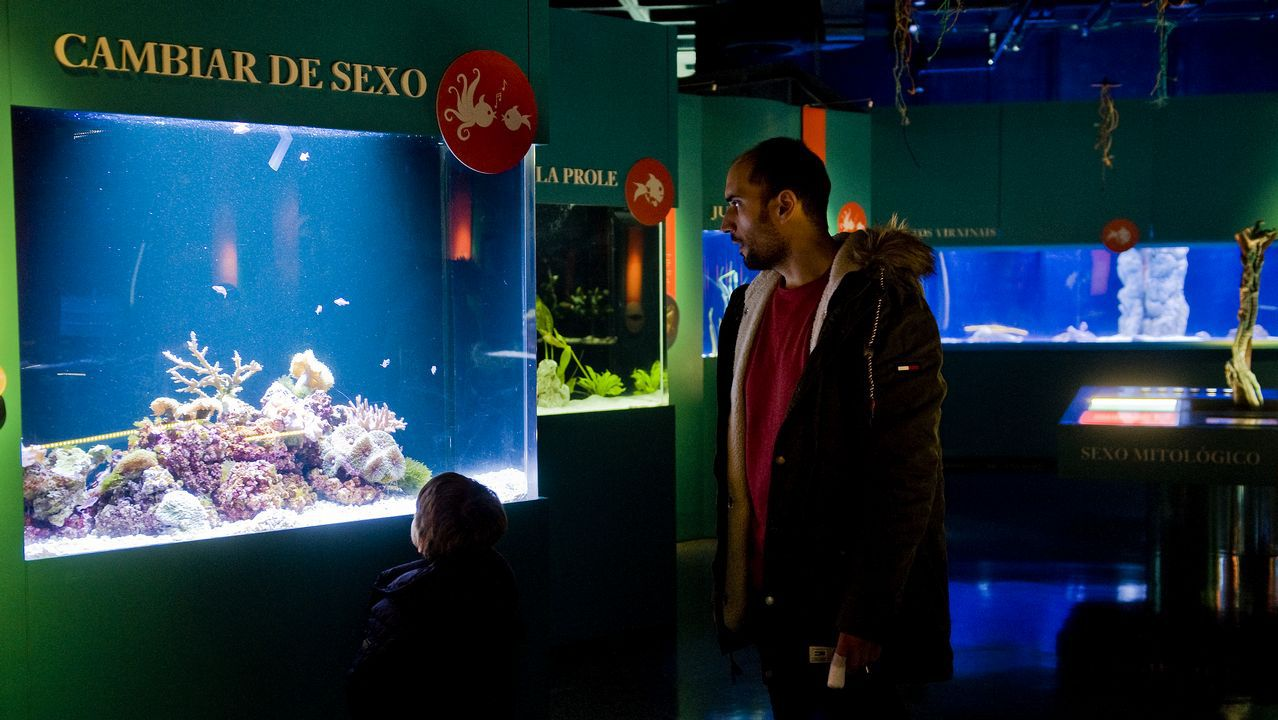 A exposición «Sexo azul» do Aquarium Finiesterrae céntrase nas incribles posibilidades de reprodución sexual que se poden descubrir no fondo mariño, amais dunha mostra de arte relacionada co tema