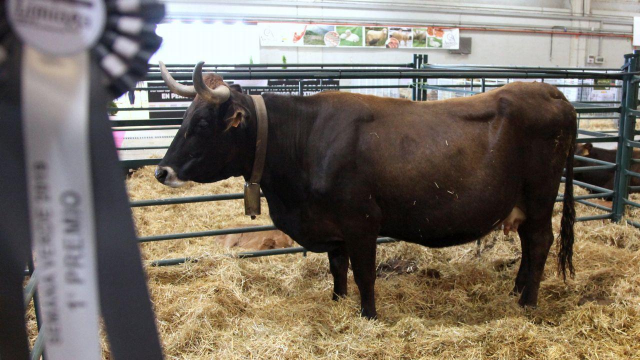 Una de las vacas premiadas en el concurso morfológico