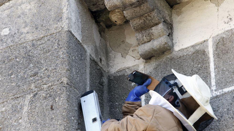Un bombero se prepara para retirar un nido de velutina en la iglesia de San Salvador de Asma, en Chantada