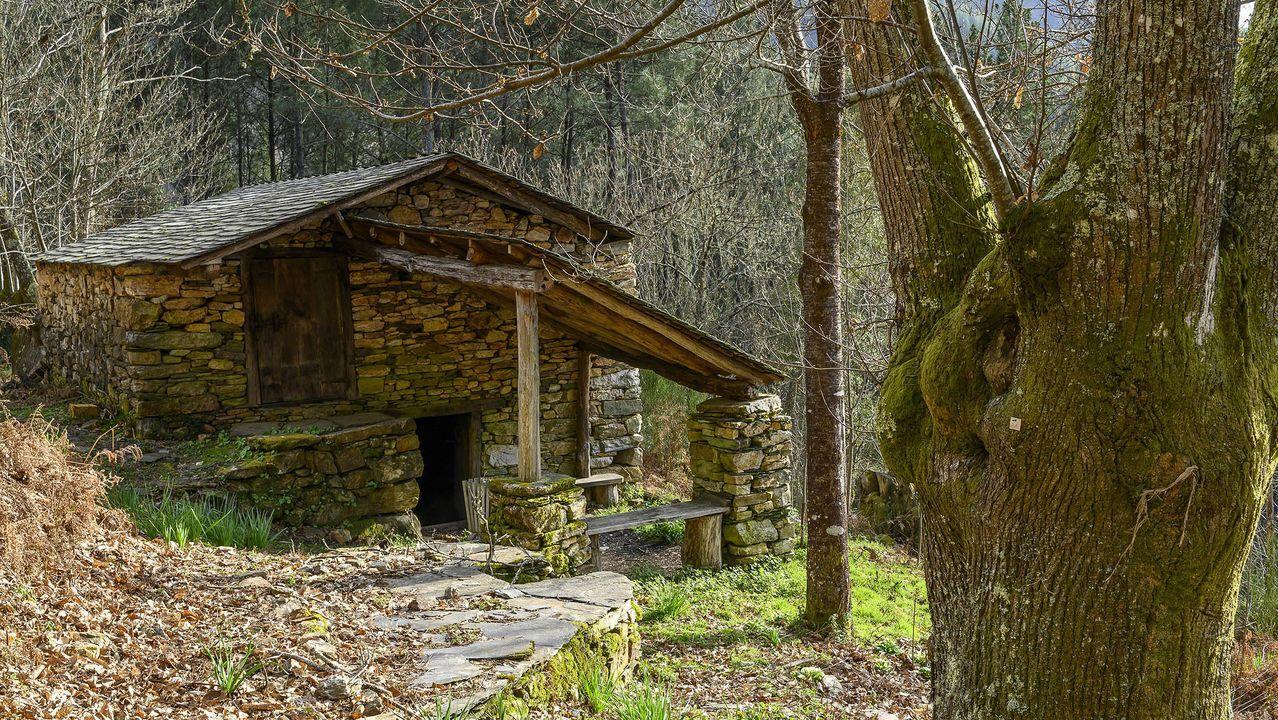 Un sequeiro fue rehabilitado hace años en el bosque