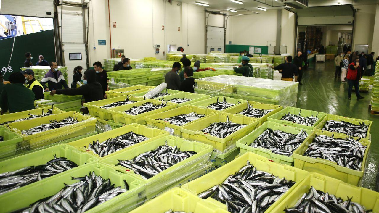 Solo el lunes, en la lonja que gestiona Armadores de Burela se subastaron 420.000 kilos de bocarte; y en la vecina de Celeiro, 180.000. Entre los pasados jueves y viernes, se vendieron solo en la burelense 405.000 kilos. La mayoría de ese millón capturados frente a A Mariña se destinan a semiconserva de anchoa o boquerón
