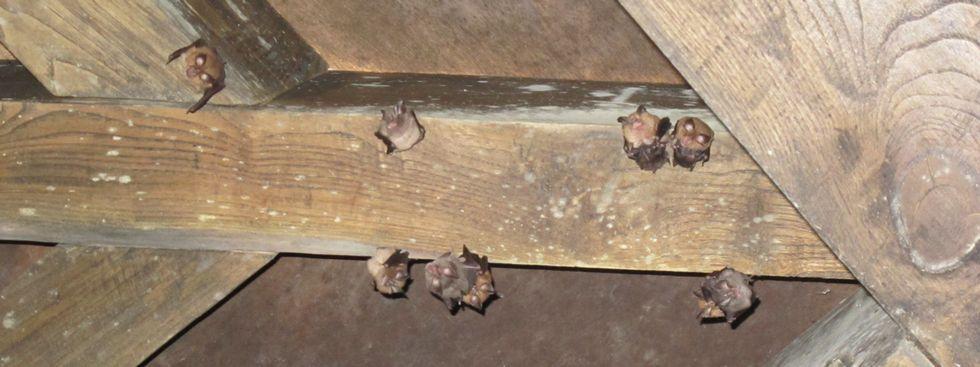 En la imagen, algunos de los ejemplares que habitan en Caaveiro.