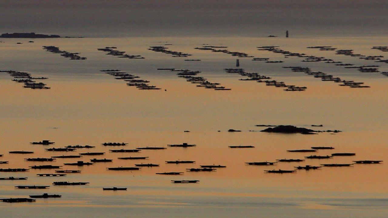 La ría de Arousa, el mar más productivo de Europa