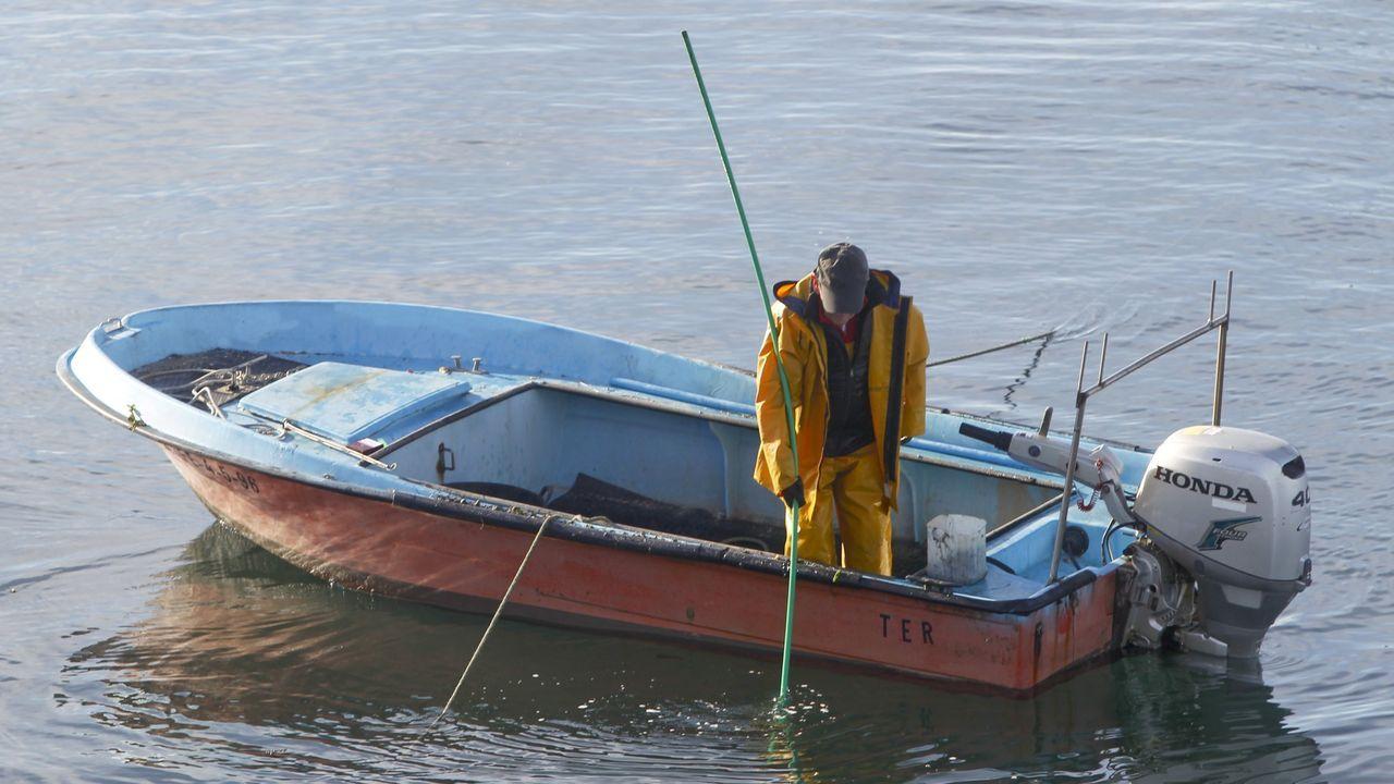 Siembran 35.000 erizos de acuicultura en dos bancos naturales de A Coruña.O termo Ortigueira é un fitotopónimo, pola alusión ás ortigas