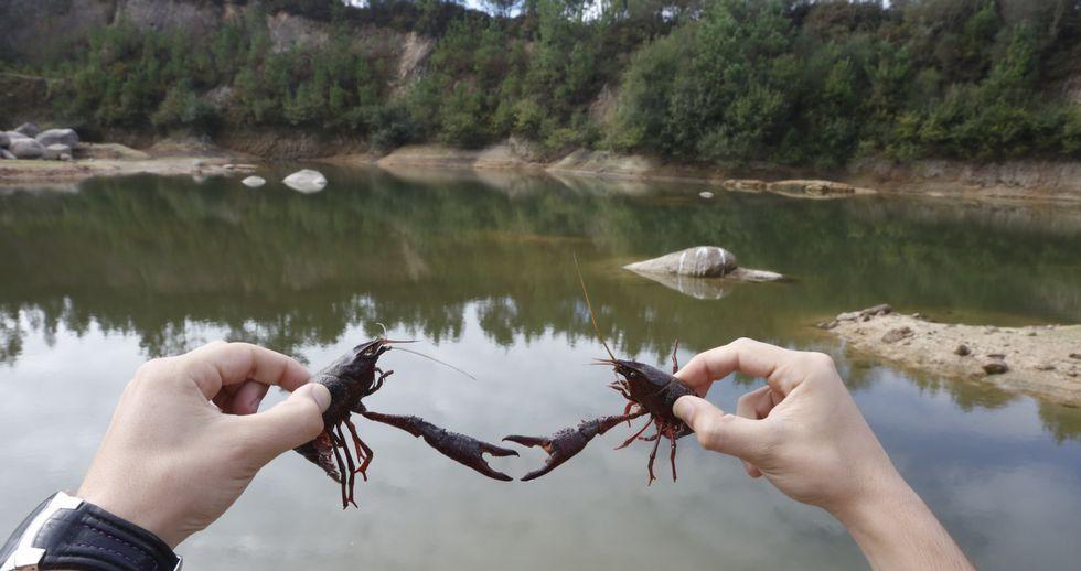 Los cangrejos americanos proliferan en una laguna en Agudelo, en Barro, formada por la acumulación del agua de la lluvia.