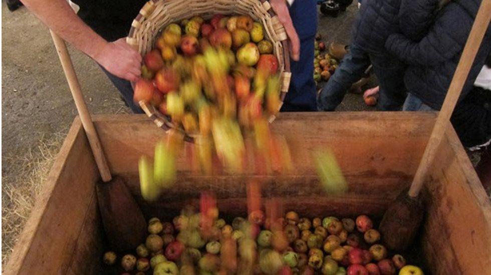 Cosecha de la manzana