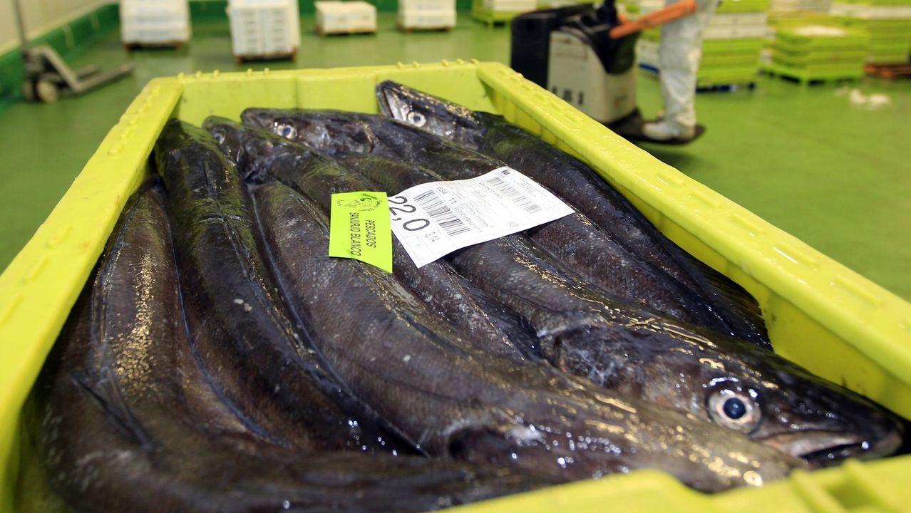 Foto de archivo de merluza de Gran Sol, la reina de los pescados blancos, un producto del mar fresco en el que  Celeiro y Burela son líderes en Galicia y España