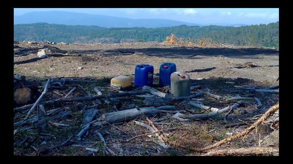 Los bidones tienen combustible procedente de una tala de pinos