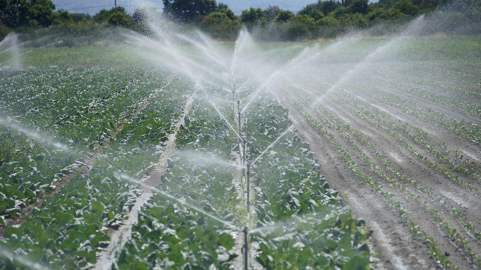 Regadío en A Limia. Las nuevas tecnologías apenas han mejorado el aprovechamiento del agua