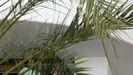 Jóvenes aislados en un hotel de Mallorca por el megabrote de covid